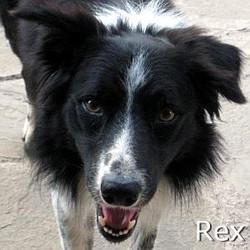 Rex1_TN.jpg