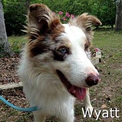Wyatt_TN.jpg
