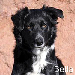 Bella01_TN.jpg