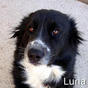 Luna_TN.jpg