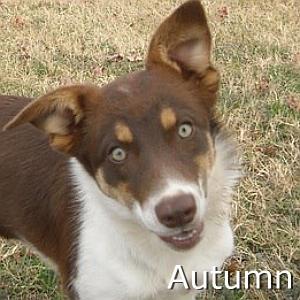 Autumn_TN.jpg
