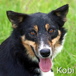Kobi_TN_New.jpg