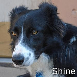 Shine_TN.jpg