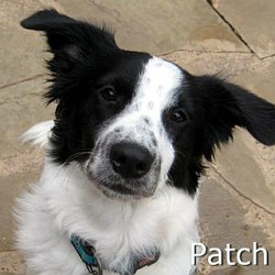 Patch_TN.jpg