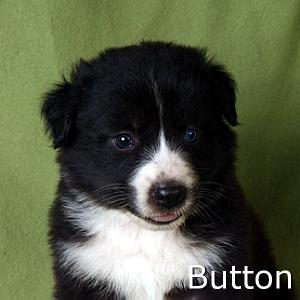 Button_TN.jpg