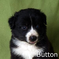 Button_TN.jpg