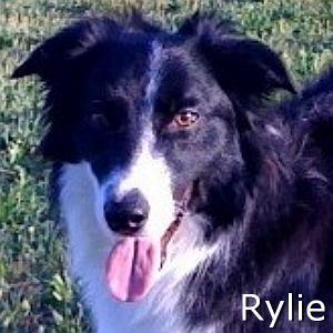 Rylie_TN.jpg
