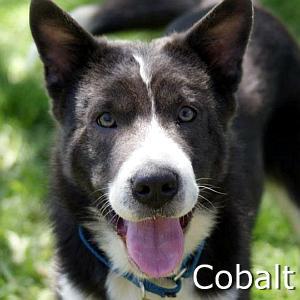 Cobalt_TN.jpg