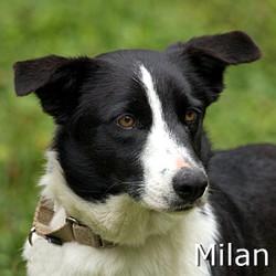 Milan_TN.jpg