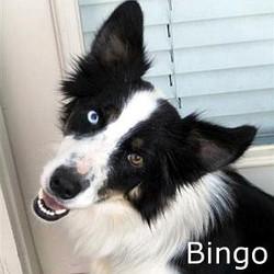 Bingo_TN.jpg