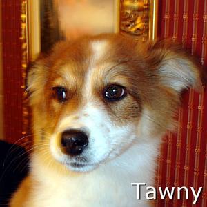 Tawny_TN.jpg