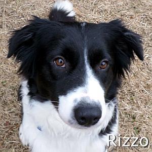 Rizzo_TN.jpg