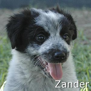 Zander_TN.jpg
