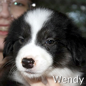Wendy_TN.jpg