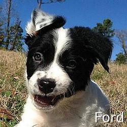Ford_TN.jpg