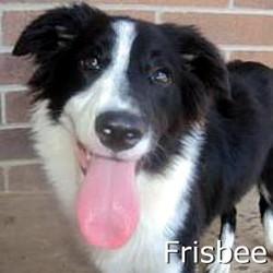 Frisbee_TN.jpg