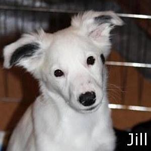 Jill_TN.jpg