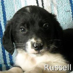 Russell_TN.jpg