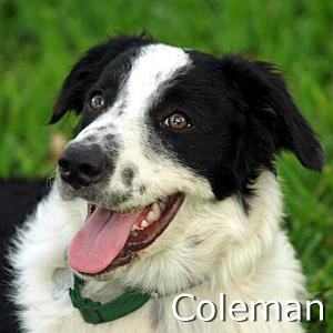 Coleman_TN.jpg