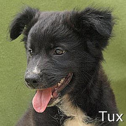Tux_TN_New.jpg