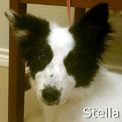 Stella_TN.jpg