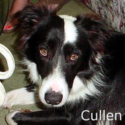 Cullen_TN.jpg