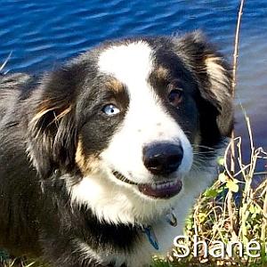 Shane-TN.jpg