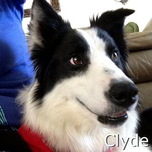 Clyde_TN.jpg