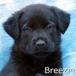 Breezie_TN.jpg