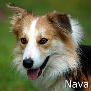 Nava_TN.jpg
