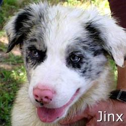 Jinx_TN.jpg