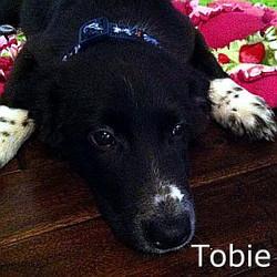 Tobie_TN.jpg