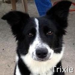 Trixie_TN.jpg