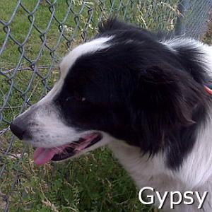 Gypsy_TN.jpg