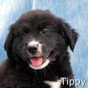 Tippy_TN.jpg