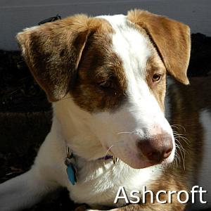 Ashcroft_TN01.jpg