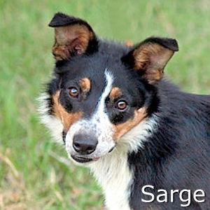 Sarge_TN.jpg
