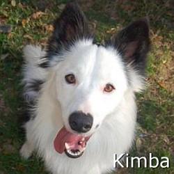 Kimba_TN.jpg