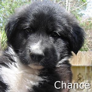 Chance_TN.jpg