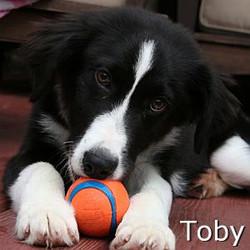 Toby_TN.jpg