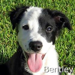 Bentley_TN.jpg