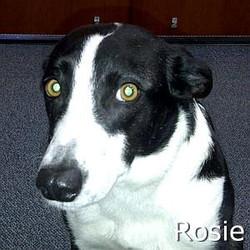 Rosie2_TN.jpg