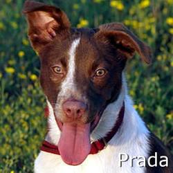 Prada_TN.jpg