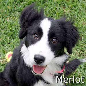 Merlot_TN.jpg