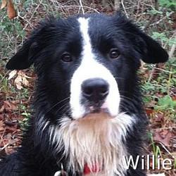 Willie_New_TN.jpg