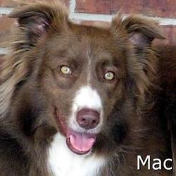 Mac_TN.jpg