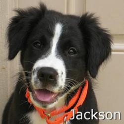 Jackson_TN.jpg