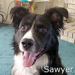 Sawyer_TN.jpg