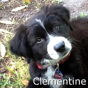 Clementine_TN.jpg