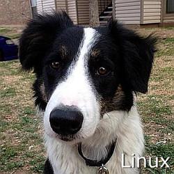 Linux_TN.jpg